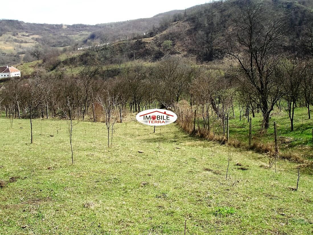 Teren 1300 mp de vanzare in aciliu - Terenes casa rural ...