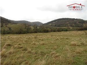 Teren 4 hectare in Gusterita